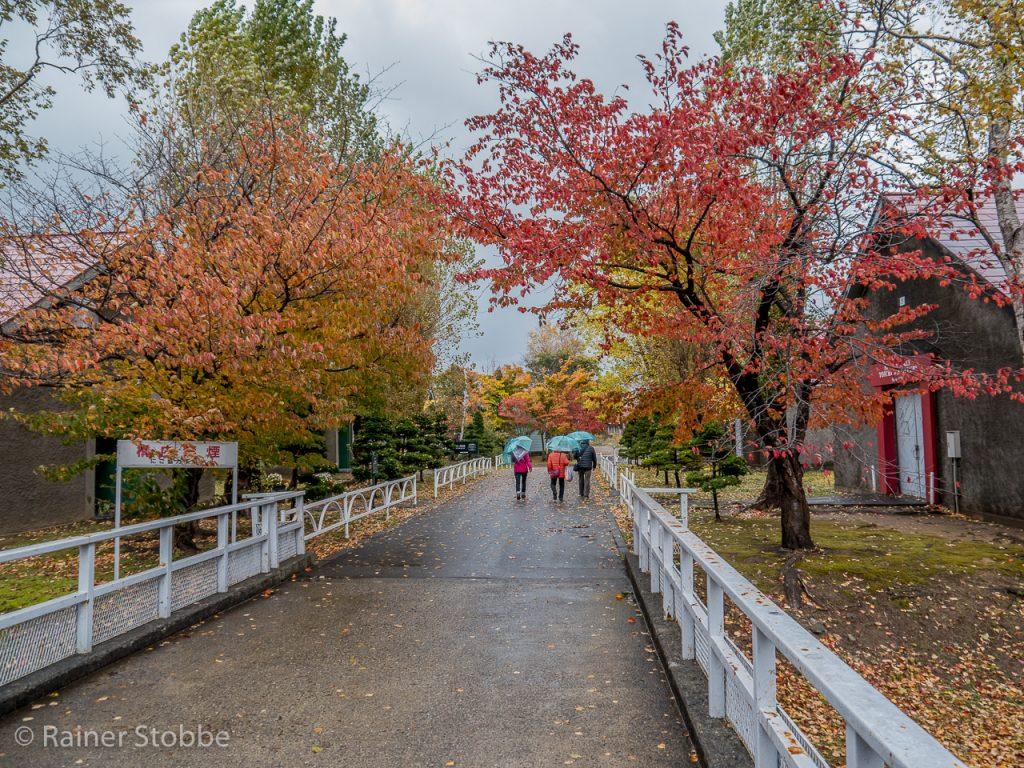 ... der durchaus auch für lauschige Herbstspaziergänge tauglich ist.